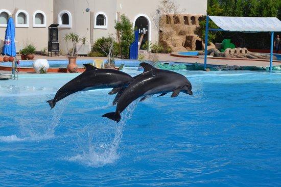 پارک دلفین ها از جاذبه های کیش